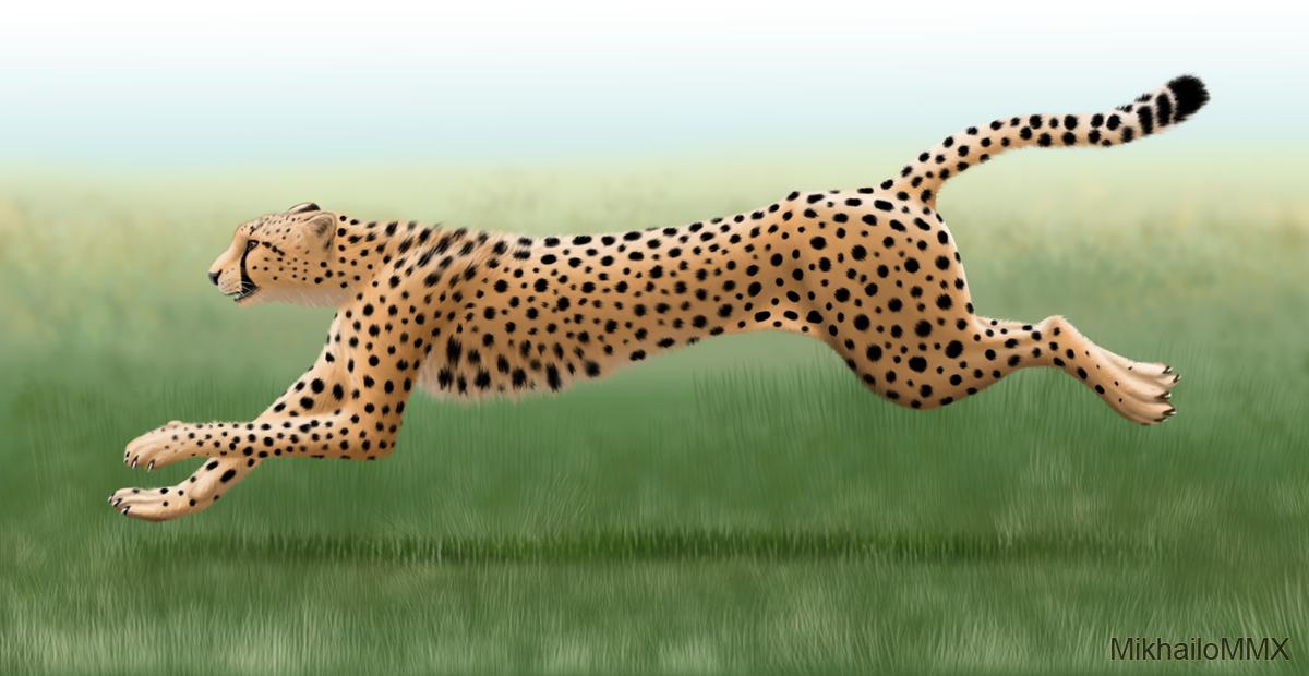 International African Cheetah Day by MikhailoMMX
