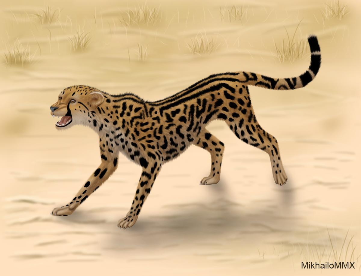 International King Cheetah Day by MikhailoMMX