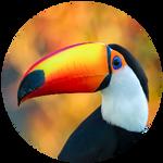 Toucan by AnniverseStash