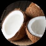 Coconut by AnniverseStash
