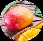 Mangifera Indica Mango by AnniverseStash