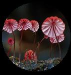 Blood-red Marasmius by AnniverseStash