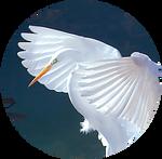 White Crane by AnniverseStash