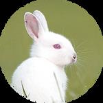 Albino European rabbit by AnniverseStash