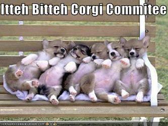 corgi comitee by kgk-lonewolf