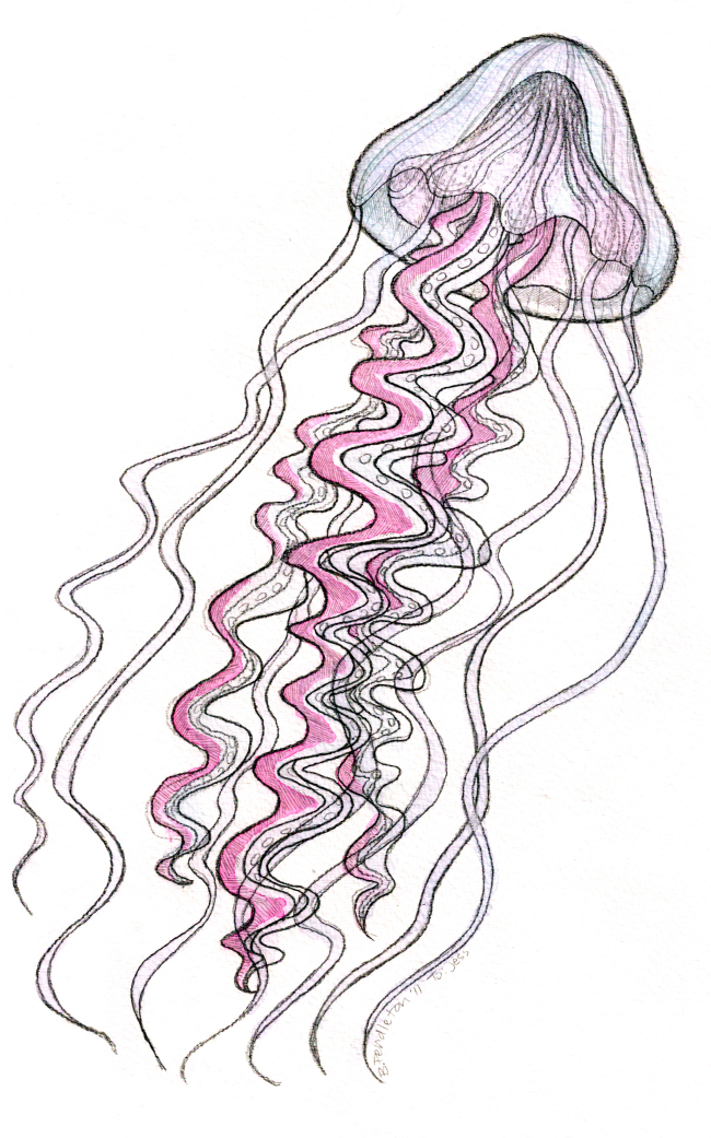 Jellyfish Drawing Color Jellyfish Colored by Beyourpet