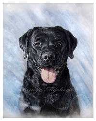 Tara, the labrador by Gwyneeth