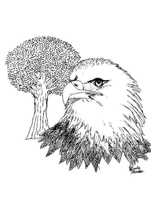 Eagle Pen and Ink by FelixNutsTomcat
