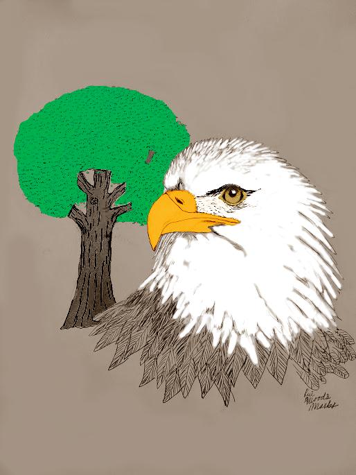 Bald Eagle color by FelixNutsTomcat