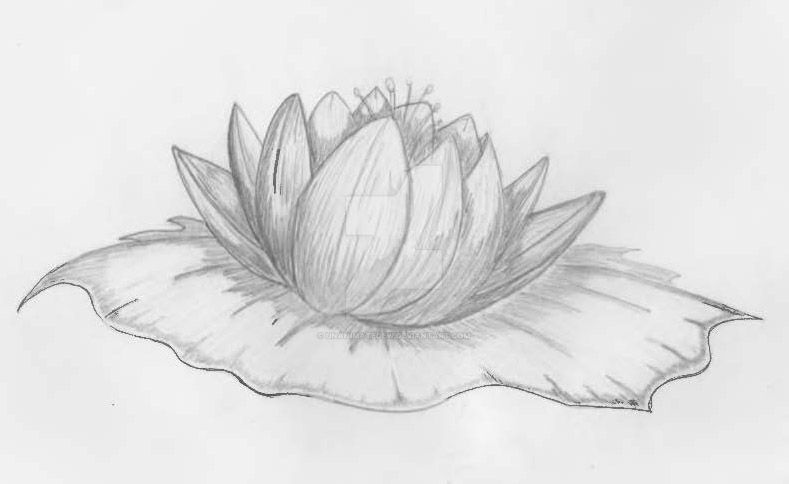 Lotus by unanimatedew