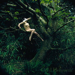 Great Auk in Tree by Cyril-Helnwein