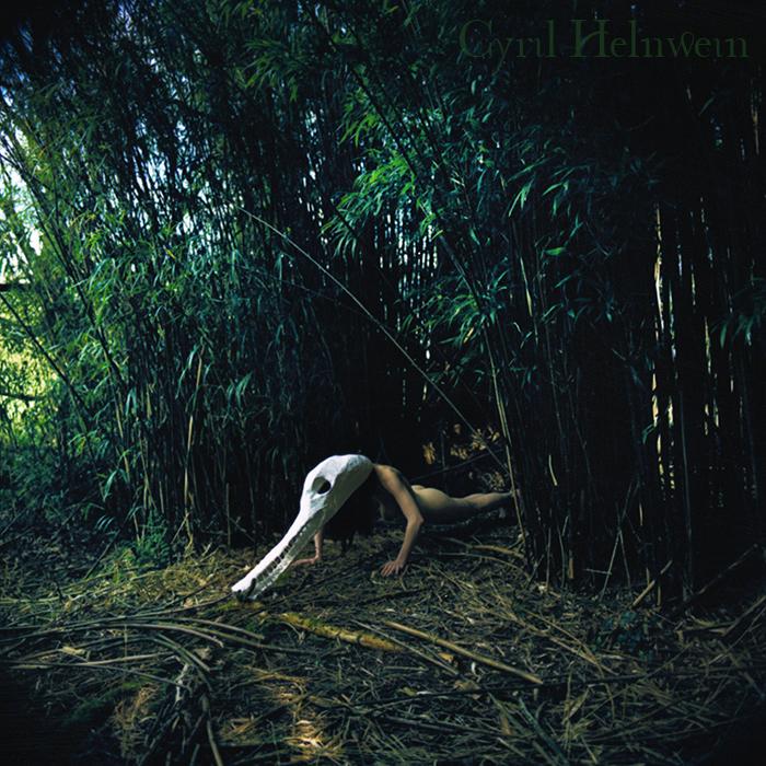 Crocodile in Bamboo by Cyril-Helnwein