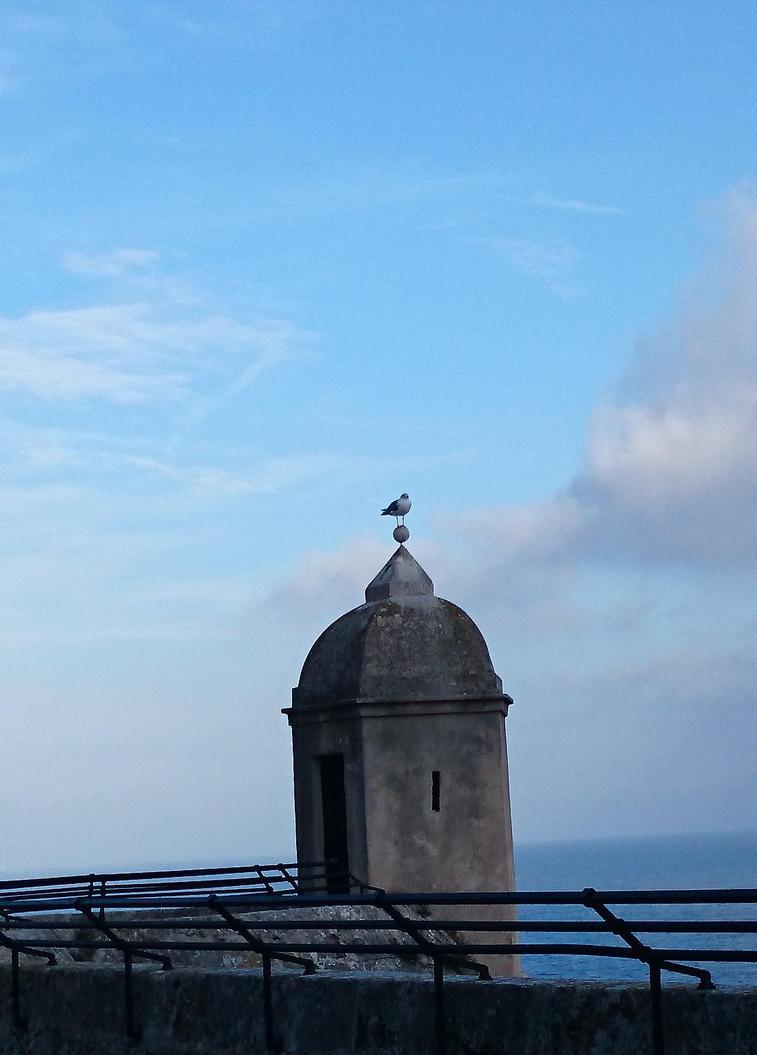 Seagull by betterreader