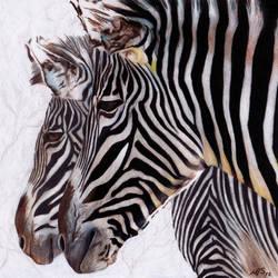 Zebras by mindilina