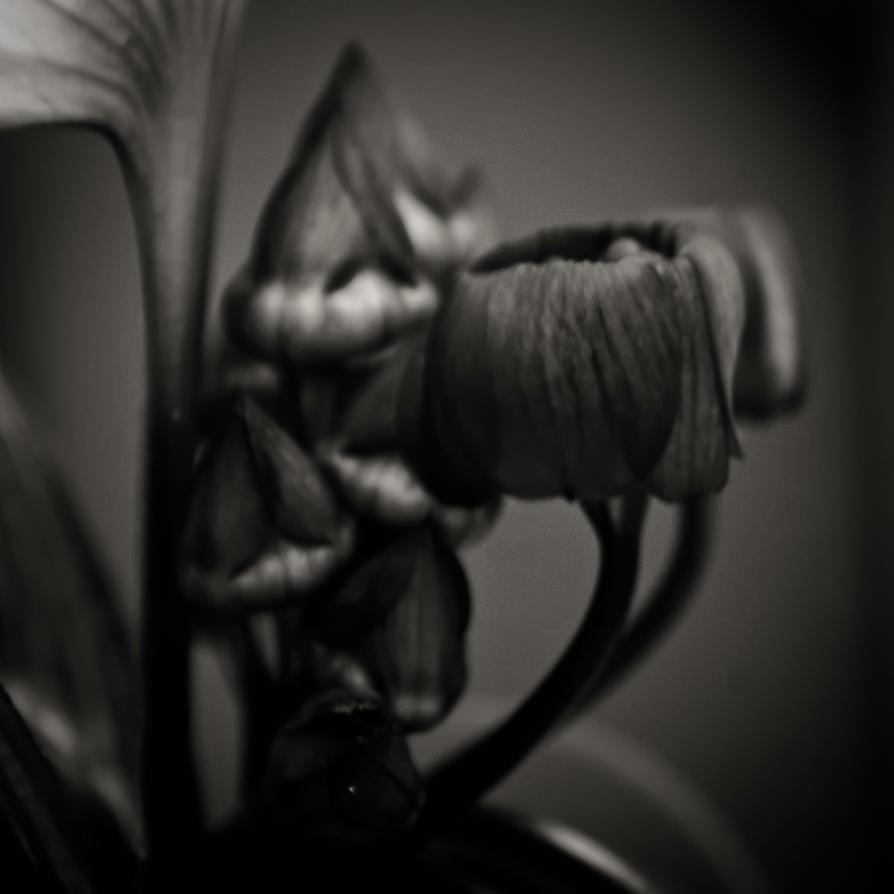 midnight garden :: 004 by girlorbital