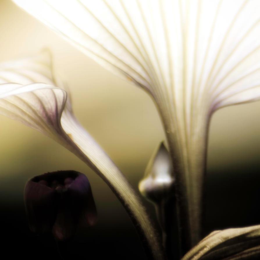 midnight garden :: 002 by girlorbital