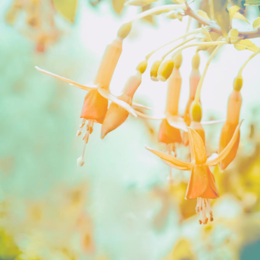 summer memories 002 by girlorbital