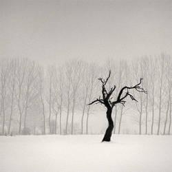 Old Tree..