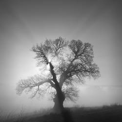 Lightened Tree..