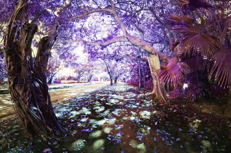 Fantasy Forest By Zabuggy2166 On Deviantart