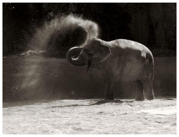 Elephant by artahh