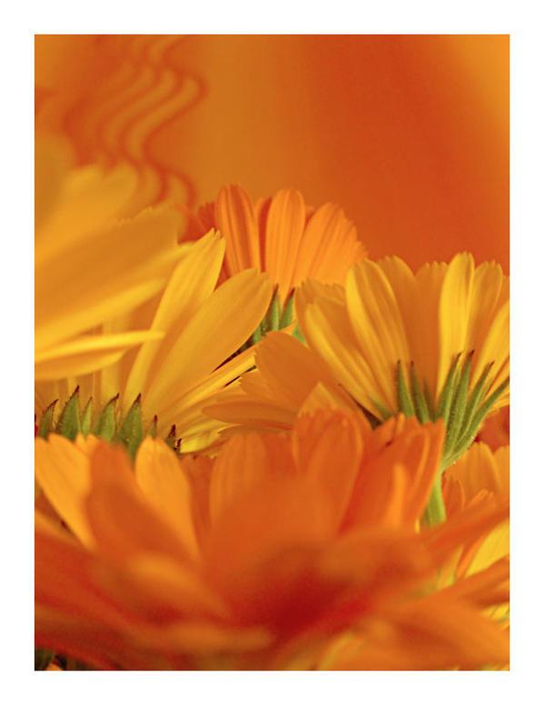 Orange by artahh