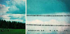 Birds by artahh