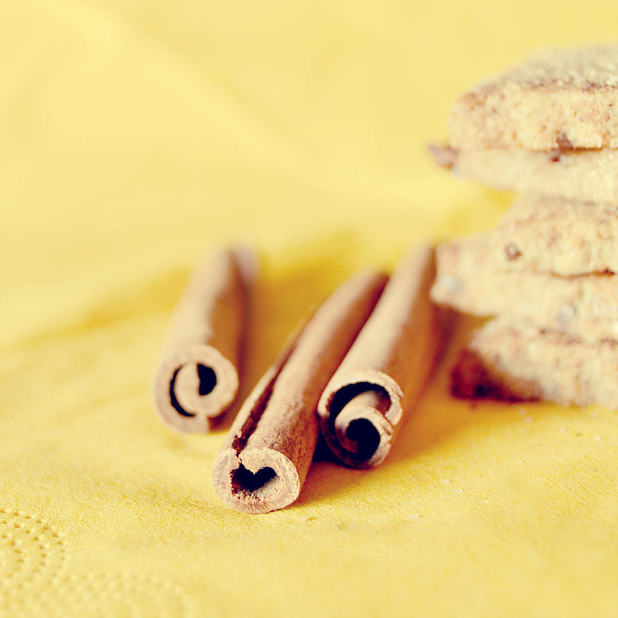 cinnamon sticks by artahh