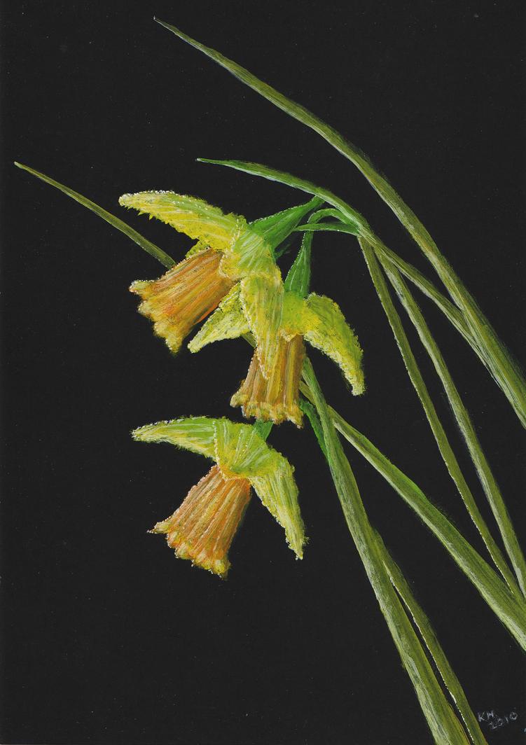 Daffodils by Kevin Heal by artgeza-II