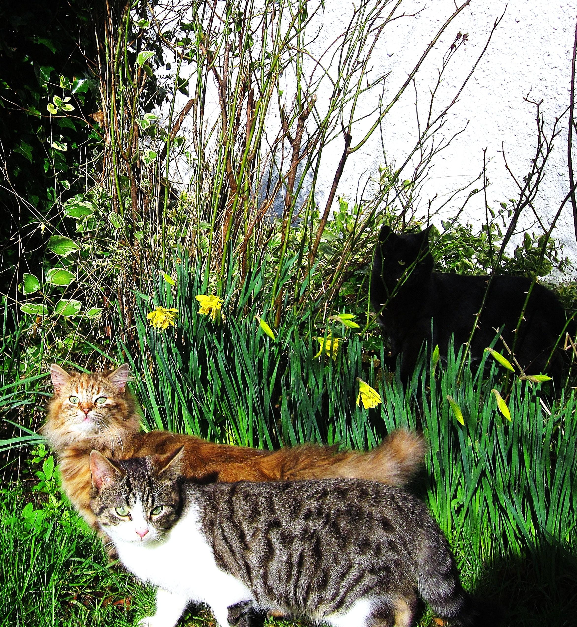 Daffodils by gypsycdn