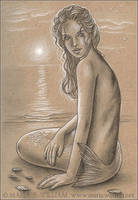 Seashells And Moonlight - Sketch by MJWilliam