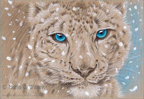 Icy Blue - Sketch by MJWilliam