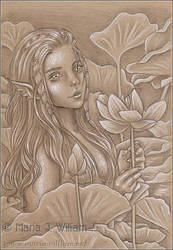 Lotus Reverie
