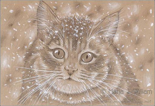 Snow Fluff - sketch