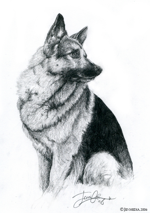 The German Shepherd by Lillidan86 on DeviantArt