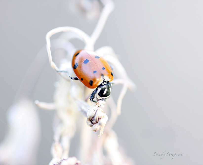 Spotted Lady by Sandy33311