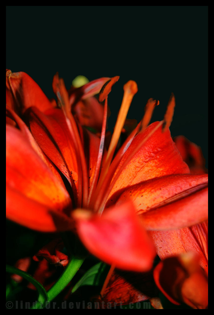 Flower. by Lindz0r