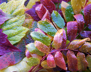 Rainbow autumn by HarleyHowl