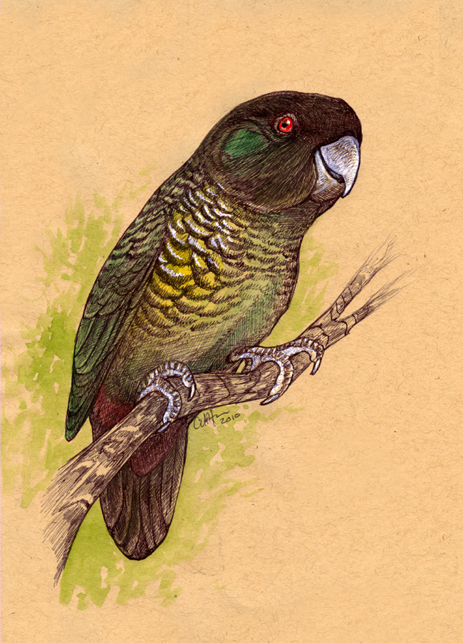 Painted Tiger Parrot by caramitten on DeviantArt