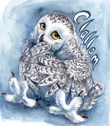 Clallam Badge