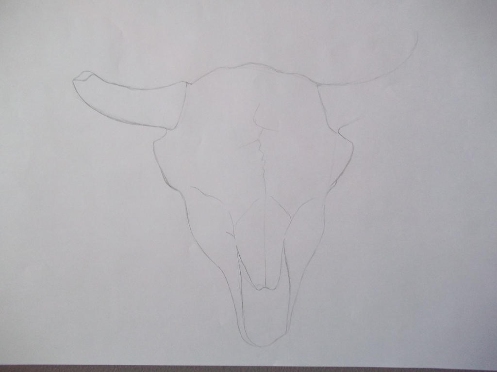 Cow Skull Sketch by XxSindertheDragonxX