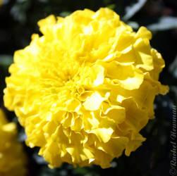 Yellow Ruffles by x-Goddess-x