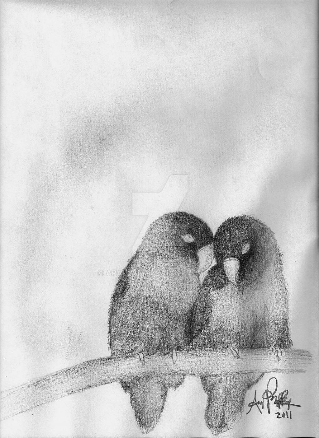Love bird drawings in pencil photo27
