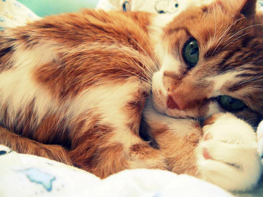 CatNap. by BeautifulChaos94