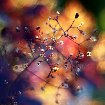 Colors of spring by marrgit
