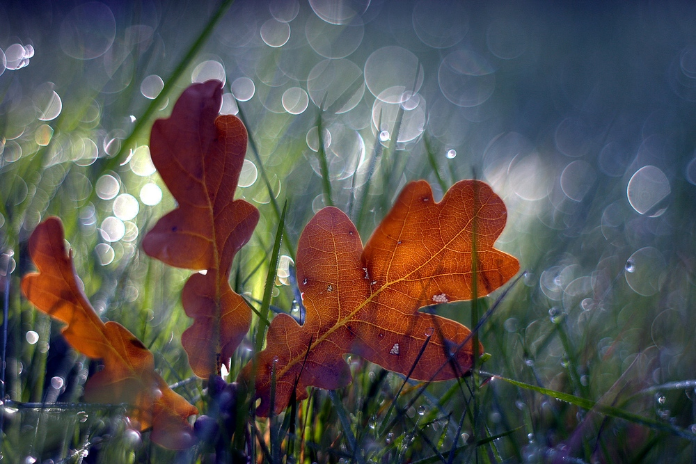 Early autumn II by marrgit