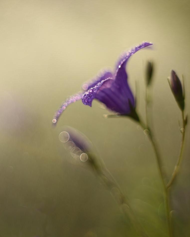 Purple rain by marrgit