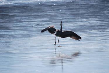 Ice Skating Heron by natureandthings