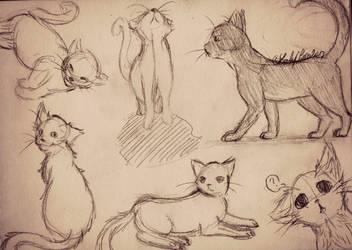 Cats (sketches) by Mistigri-Li