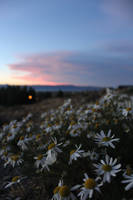 The flowers and the setting sun by Sliktor